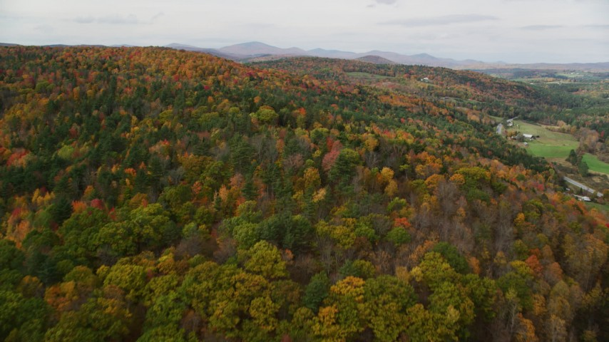 6K stock footage aerial video flying over dense forest of brightly colored trees, autumn, Wells River, Vermont Aerial Stock Footage | AX150_310