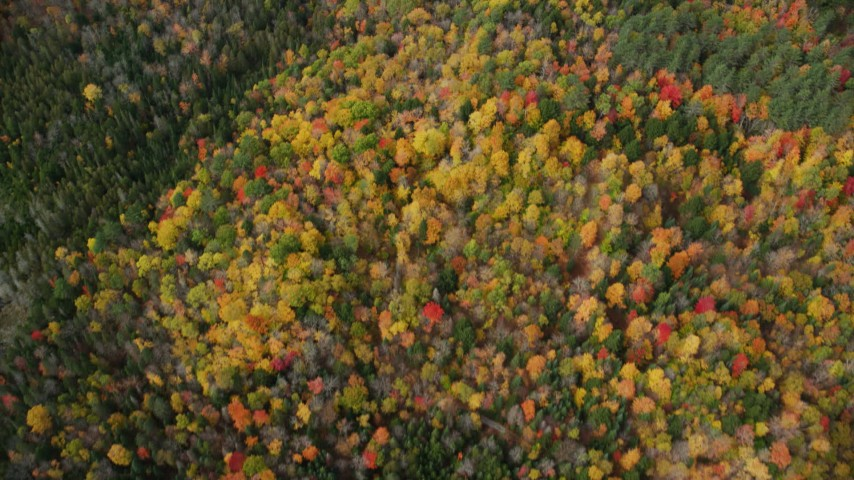 6K stock footage aerial video of a bird's eye view flying over a colorful forest in autumn, Ryegate, Vermont Aerial Stock Footage | AX150_315