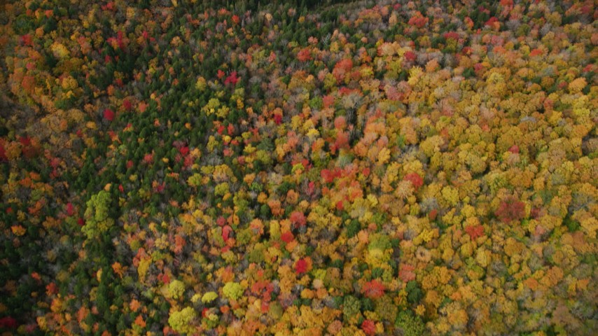 6K stock footage aerial video of a bird's eye view flying over brightly colored forest, autumn, Ryegate, Vermont Aerial Stock Footage   AX150_316