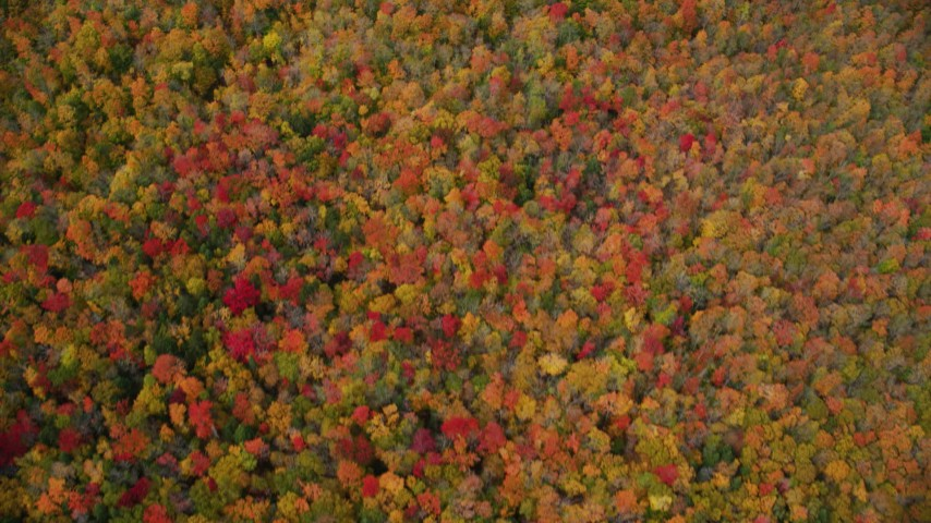 6K stock footage aerial video of a bird's eye view over forest of brightly colored trees, autumn, Ryegate, Vermont Aerial Stock Footage | AX150_317