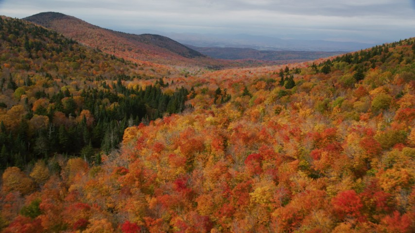 6K stock footage aerial video flying over dense forest of colorful trees, mountains, autumn, Orange, Vermont Aerial Stock Footage | AX150_326
