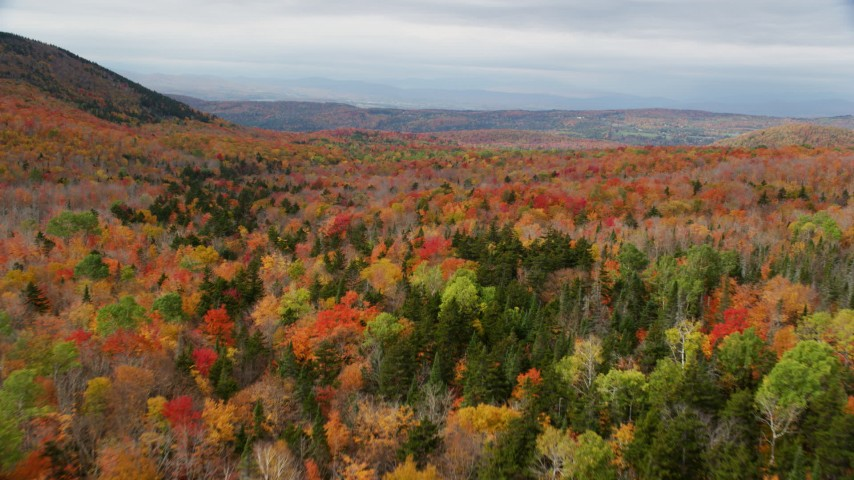 6K stock footage aerial video flying over bright forest in autumn, overcast, Orange, Vermont Aerial Stock Footage | AX150_329