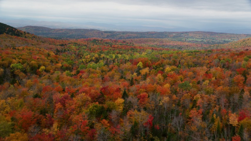 6K stock footage aerial video flying over dense, colorful forest in autumn, overcast, Orange, Vermont Aerial Stock Footage | AX150_330