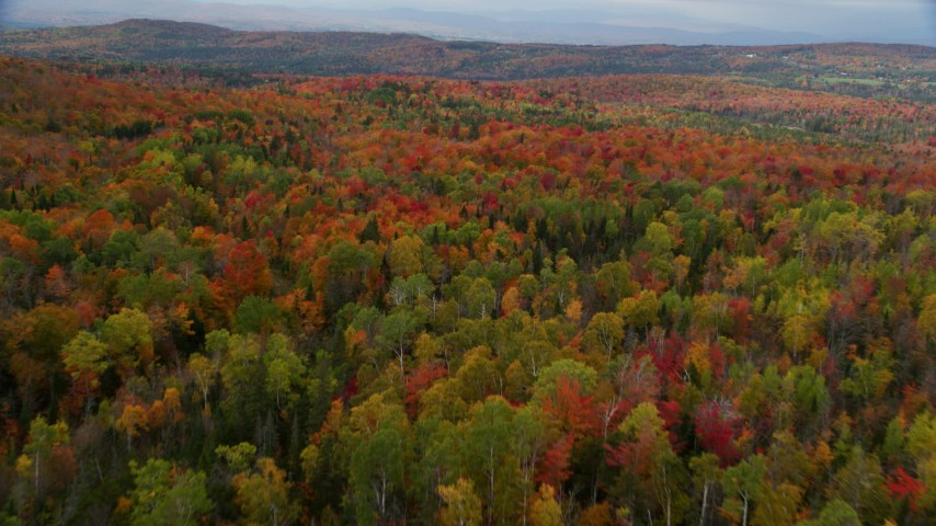 6K stock footage aerial video flying over forest of dense, colorful trees, overcast, autumn, Orange, Vermont Aerial Stock Footage | AX150_331