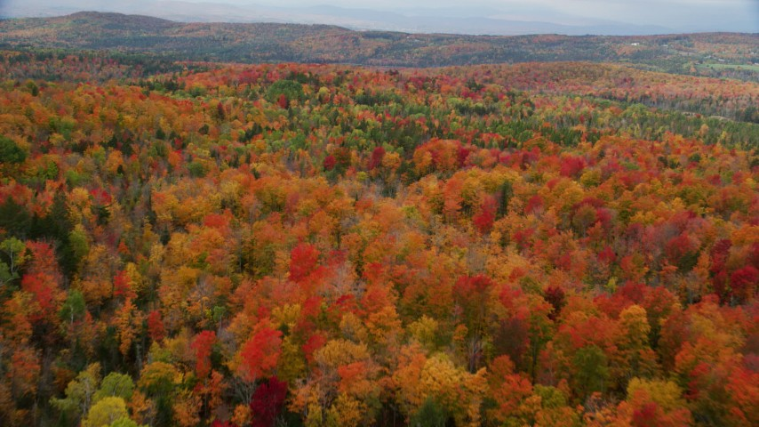6K stock footage aerial video flying over colorful, dense forest, overcast autumn day, Orange, Vermont Aerial Stock Footage | AX150_332