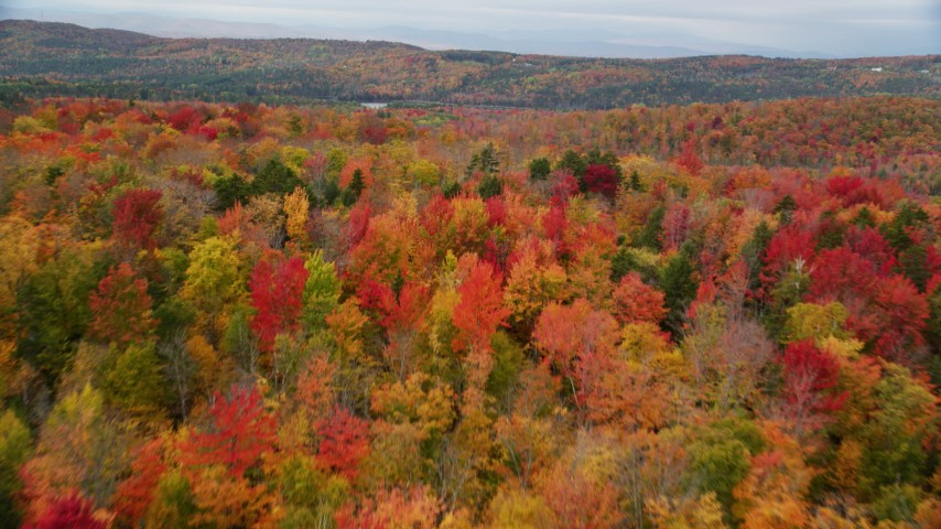 6K stock footage aerial video flying over brightly colored, dense forest, autumn, overcast, Orange, Vermont Aerial Stock Footage AX150_333 | Axiom Images