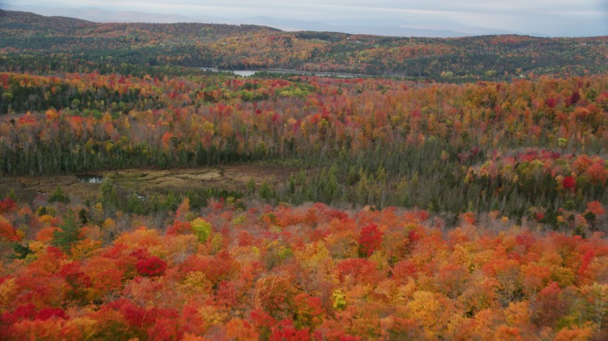 6K stock footage aerial video flying over colorful trees, dense forest, autumn, Orange, Vermont Aerial Stock Footage | AX150_334