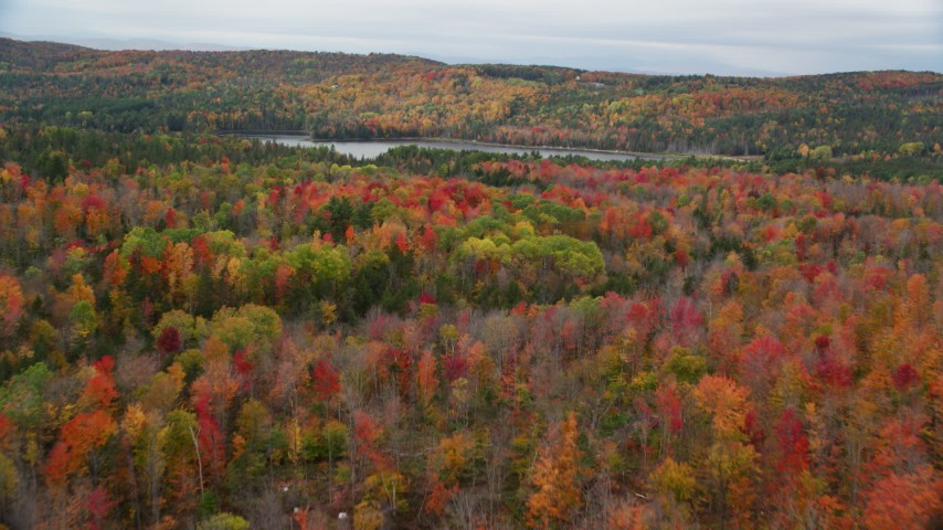 6K stock footage aerial video flying over colorful forest, approach Thurman W Dix Reservoir, autumn, Orange, Vermont Aerial Stock Footage | AX150_335