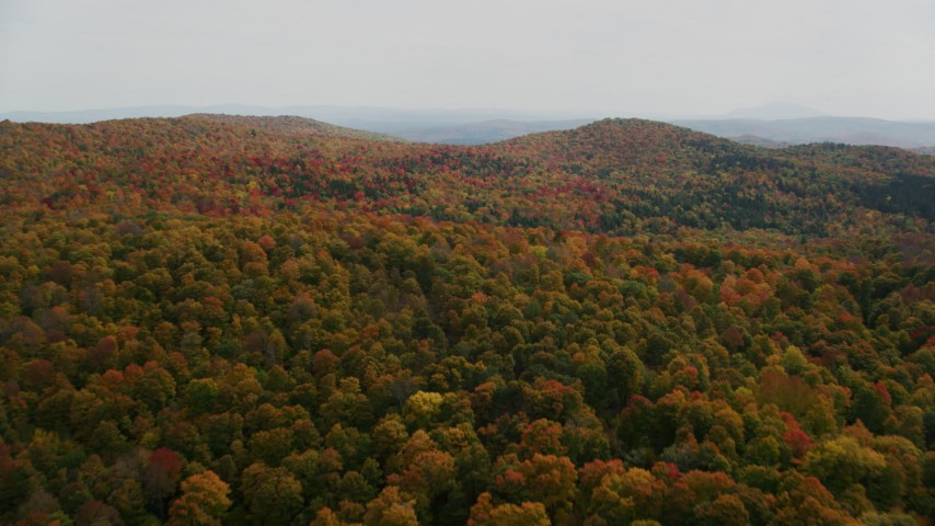 6K stock footage aerial video flying over colorful, densely forested hills in autumn, North Pomfret, Vermont Aerial Stock Footage | AX150_461