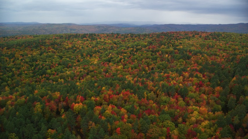 6K stock footage aerial video flying over dense, colorful forest, autumn, overcast, White River Junction, Vermont Aerial Stock Footage | AX151_003