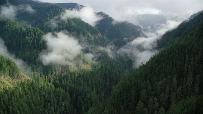 6K aerial video following Eagle Creek Trail through a wooded canyon in the Cascade Range, Hood River County, Oregon Aerial Stock Footage | AX154_045