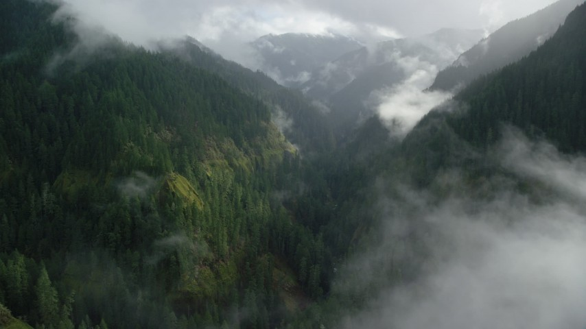 6K aerial video following the Eagle Creek Trail through a canyon in Cascade Range, Hood River County, Oregon Aerial Stock Footage | AX154_047