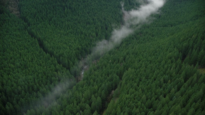 6K stock footage aerial video of bird's eye view of mist over a creek, and evergreen forest in the Cascade Range, Hood River County, Oregon Aerial Stock Footage | AX154_053