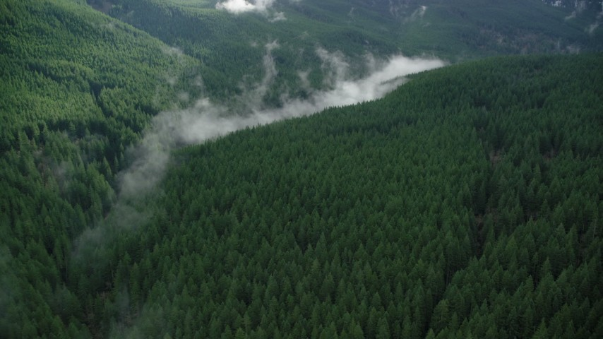 6K aerial video flying over evergreen forest to approach clouds of mist in the Cascade Range, Hood River County, Oregon Aerial Stock Footage | AX154_055