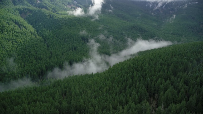 6K stock footage aerial video of mist hanging over evergreen trees at the bottom of a canyon in the Cascade Range, Hood River County, Oregon Aerial Stock Footage | AX154_056