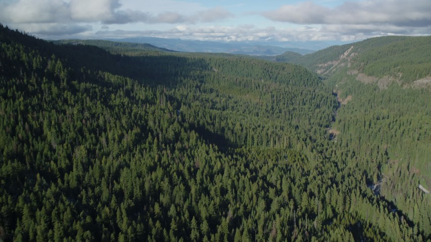 6K aerial video flying over canyon and evergreen forest near Highway 35, Cascade Range, Hood River Valley, Oregon Aerial Stock Footage | AX154_127