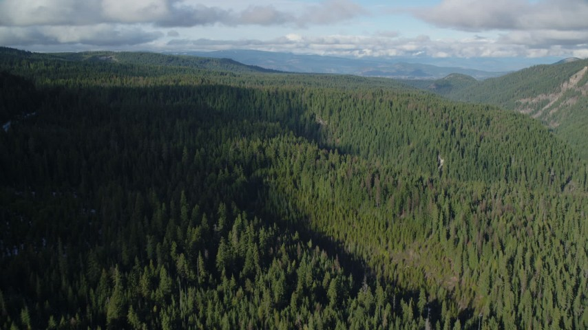 6K stock footage aerial video flying over evergreen forest in the Cascade Range, Hood River Valley, Oregon Aerial Stock Footage | AX154_128
