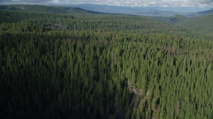 6K stock footage aerial video flying over evergreen forest in Cascade Range, Hood River Valley, Oregon Aerial Stock Footage | AX154_129