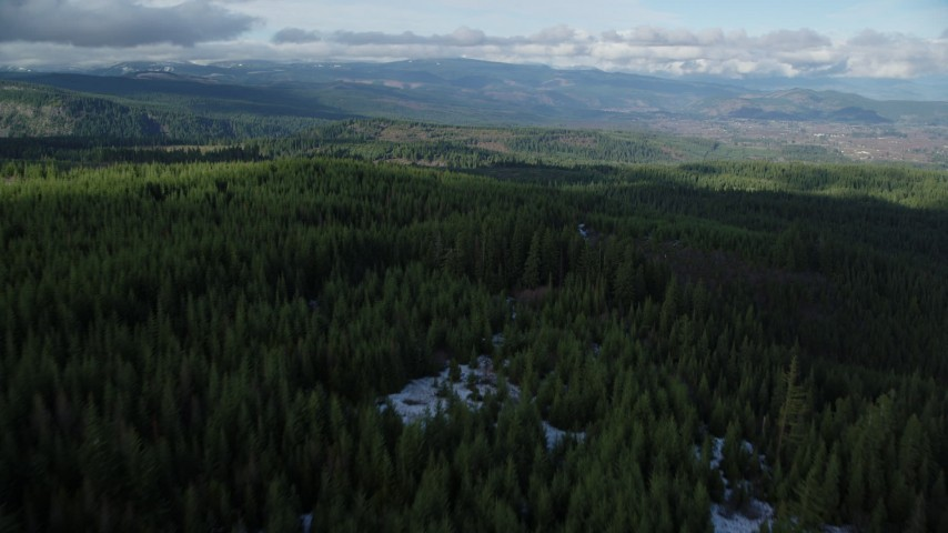 6K stock footage aerial video flying over forest trail through evergreens in the Cascade Range, Hood River Valley, Oregon Aerial Stock Footage | AX154_133