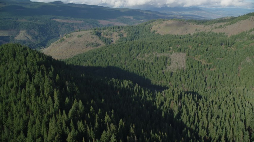 6K stock footage aerial video flying over evergreen forest to approach clear cut logging areas near Dee, Oregon Aerial Stock Footage | AX154_145