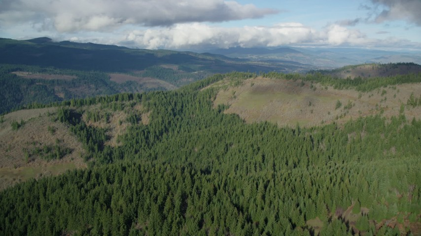 6K aerial video approaching and flying over evergreen forest and logging areas, Dee, Oregon Aerial Stock Footage | AX154_146
