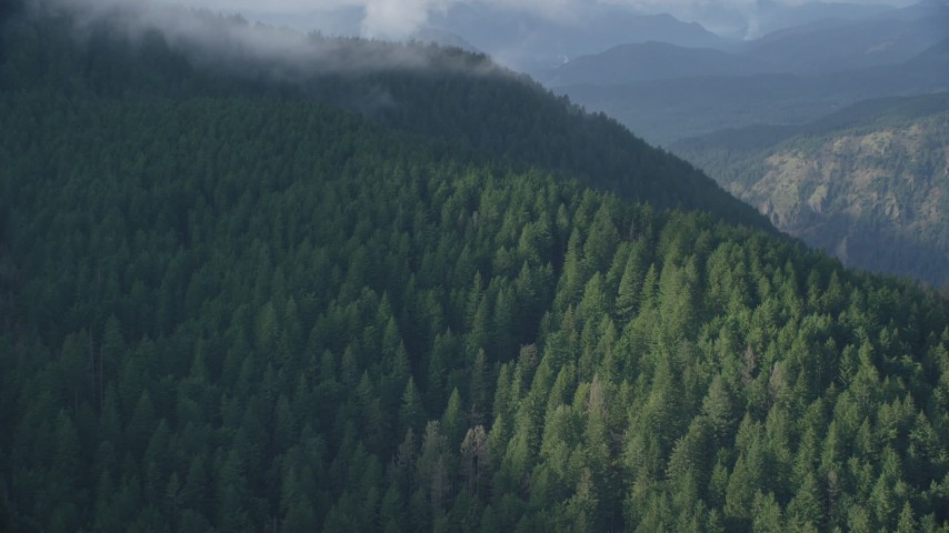 6K aerial video flying by dense evergreen forest and mountains, Columbia River Gorge, Hood River County, Oregon Aerial Stock Footage | AX154_153