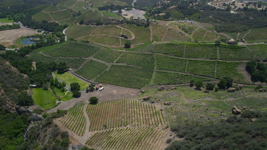 Passing by hilly vineyards with rows of vines, Malibu, California Aerial Stock Footage | AX42_106