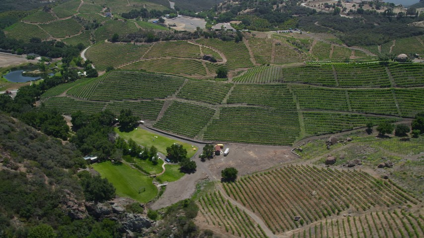 5K stock footage aerial video of passing by hilly vineyards with rows of vines, Malibu, California Aerial Stock Footage | AX42_106