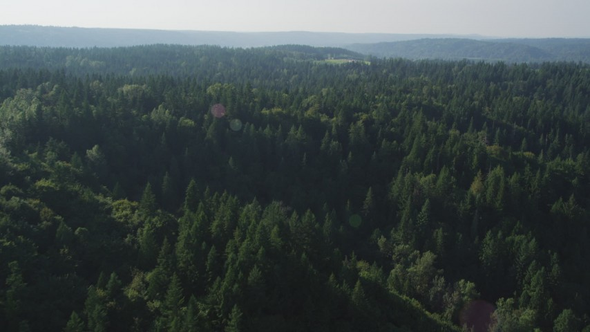 5K stock footage aerial video fly by an evergreen forest near Carnation, Washington Aerial Stock Footage | AX48_031