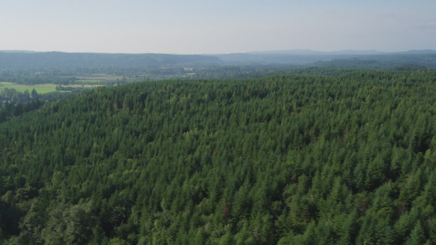 5K stock footage aerial video of flying by a lush evergreen forest in King County, Washington Aerial Stock Footage | AX48_042