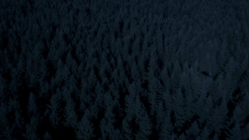 4K day for night color corrected aerial footage of evergreen trees, tilt to approach and fly over a clear cut area, King County, Washington Aerial Stock Footage | AX48_043_DFN