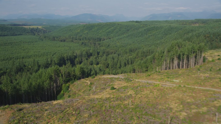 5K stock footage aerial video fly over a clear cut area, pan to approach evergreen forest in King County, Washington Aerial Stock Footage | AX48_044