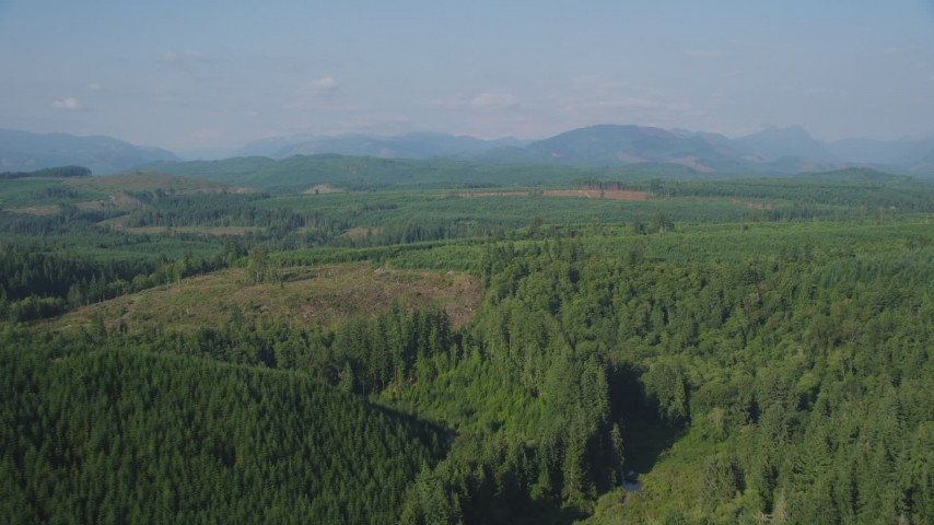 5K aerial video fly over vast evergreen forest to approach a clear cut area in King County, Washington Aerial Stock Footage | AX48_046