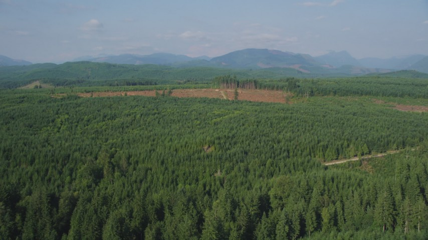 5K stock footage aerial video of flying over evergreen trees to approach a wide clear cut area, King County, Washington Aerial Stock Footage | AX48_047
