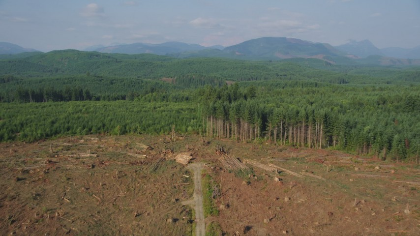 5K aerial video approach and fly over a logging clear cut area in an evergreen forest, King County, Washington Aerial Stock Footage | AX48_048