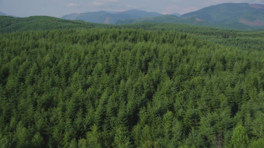 5K aerial video fly over evergreen trees in a vast forest in King County, Washington Aerial Stock Footage | AX48_050