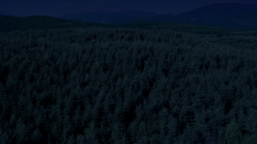 Day for night color corrected aerial footage of evergreen trees in a vast forest in King County, Washington Aerial Stock Footage AX48_050_DFN
