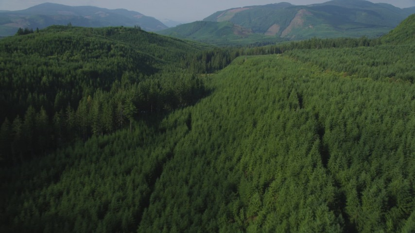5K stock footage aerial video fly over an evergreen forest to reveal a narrow road through the trees in King County, Washington Aerial Stock Footage | AX48_055
