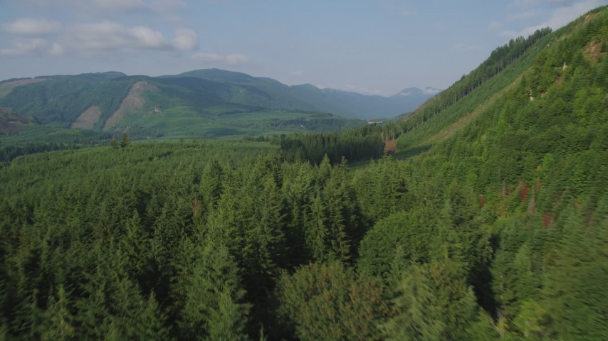 5K stock footage aerial video fly over evergreen forest to reveal a clear cut area on a mountain slope and a road in King County, Washington Aerial Stock Footage | AX48_056