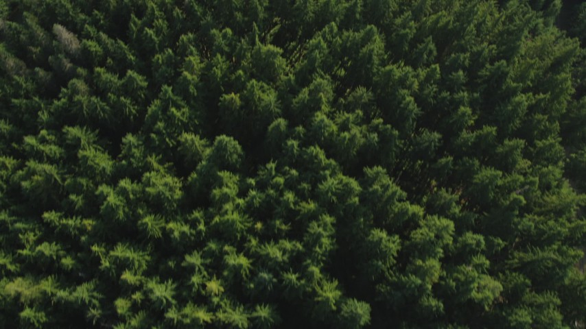 5K stock footage aerial video of a bird's eye flying over an evergreen forest, King County, Washington Aerial Stock Footage | AX48_072