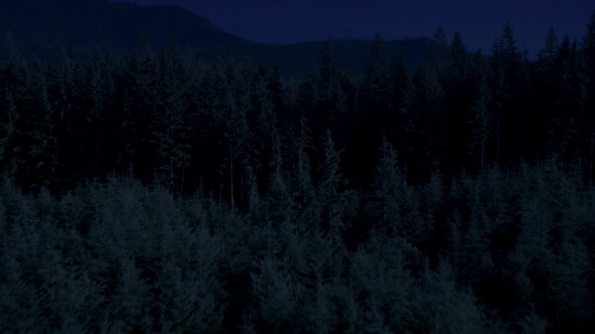 Day for night color corrected aerial footage of flying low over an evergreen forest, King County, Washington Aerial Stock Footage | AX48_073_DFN