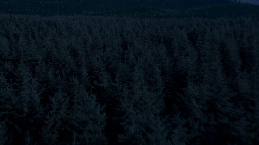 Day for night color corrected aerial footage of of flying low over evergreen trees, King County, Washington Aerial Stock Footage | AX48_074_DFN