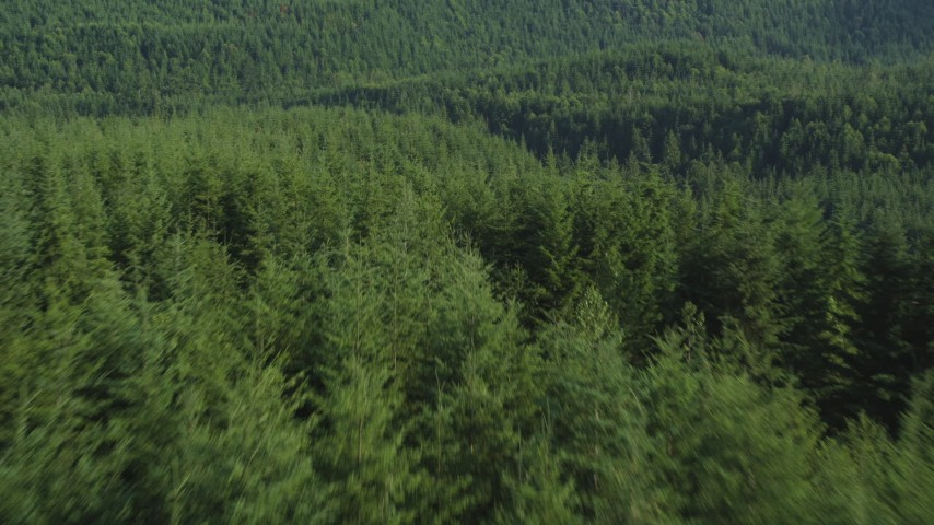 5K stock footage aerial video of low altitude flight over the tops of evergreen trees in King County, Washington Aerial Stock Footage | AX48_075