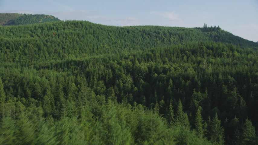 5K stock footage aerial video of flying over dense evergreen forest in King County, Washington Aerial Stock Footage | AX48_076