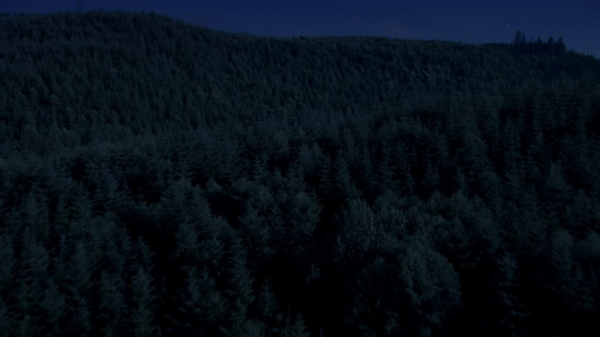 4K day for night color corrected aerial footage of flying over dense evergreen forest in King County, Washington Aerial Stock Footage | AX48_076_DFN