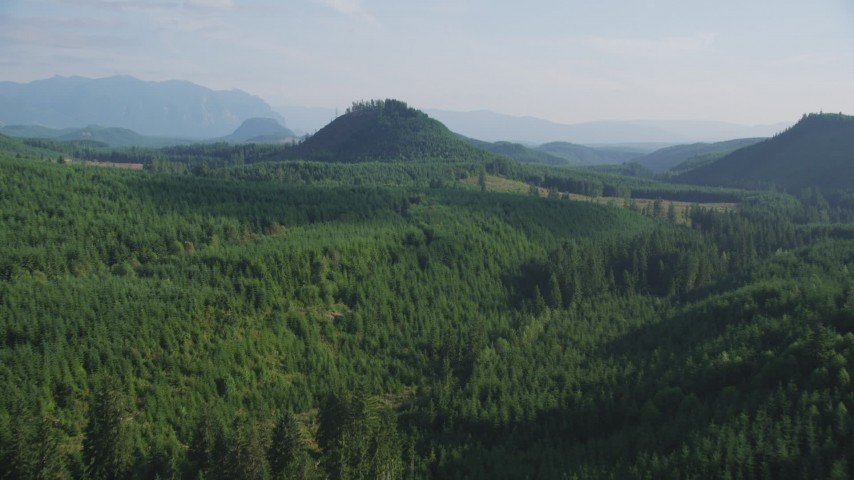 5K stock footage aerial video fly over evergreen forest to reveal a green hill and logging areas in King County, Washington Aerial Stock Footage | AX48_077