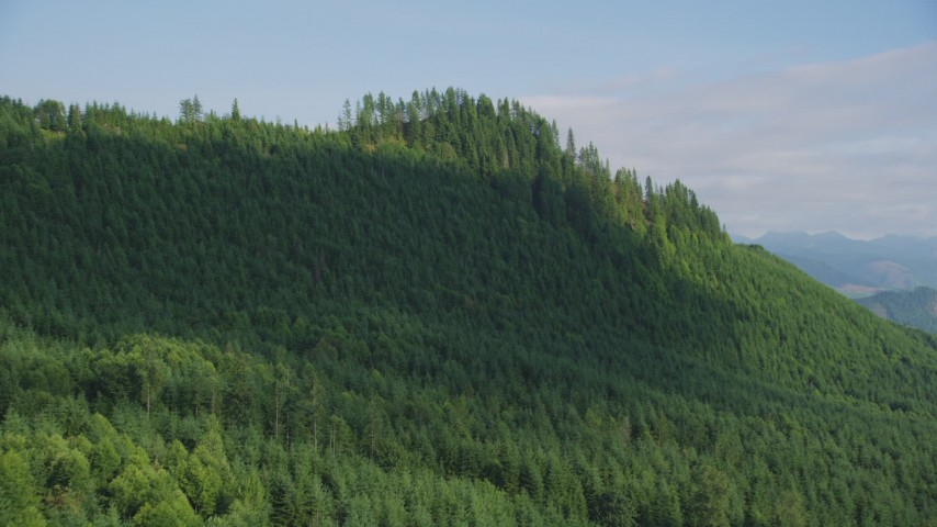 5K aerial video approach and pan across a ridge with evergreen trees in King County, Washington Aerial Stock Footage | AX48_078