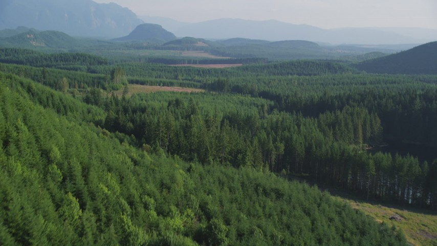 5K aerial video fly over dense evergreen forest with a few clear cut logging areas in King County, Washington Aerial Stock Footage | AX48_079