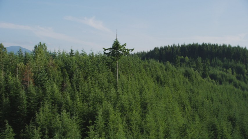 5K stock footage aerial video fly over and pan across evergreen forest on a mountain ridge in the Cascade Range, Washington Aerial Stock Footage | AX48_084