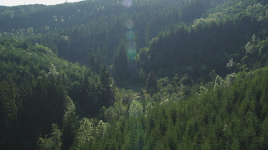 5K stock footage aerial video of evergreen forest at the base of a mountain in the Cascade Range, Washington Aerial Stock Footage | AX48_085